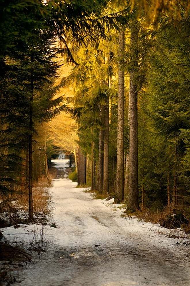 Forest Road, Saxony, Germany
