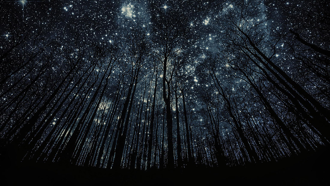 starry forest wallpaper - photo #16