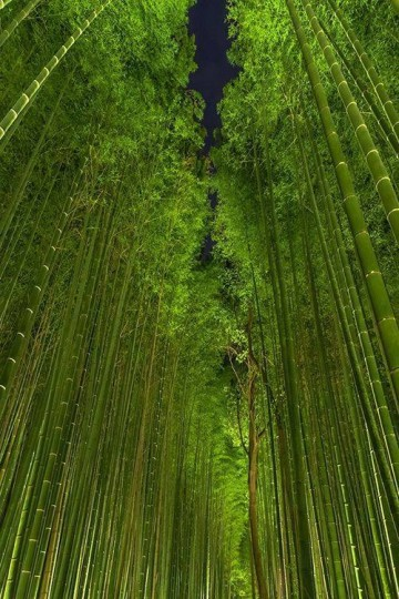 Beautiful Bamboo Forest by night, Arashiyama, Kyoto, Japan