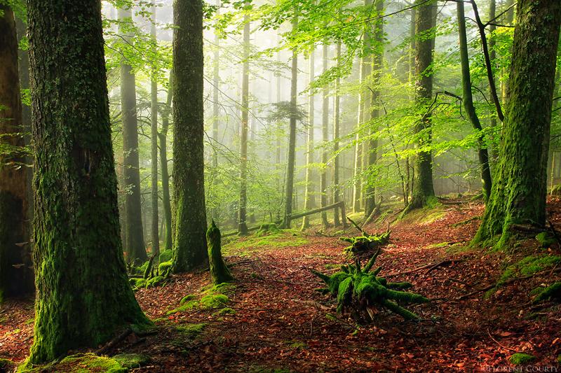 Les Bois Noirs, France