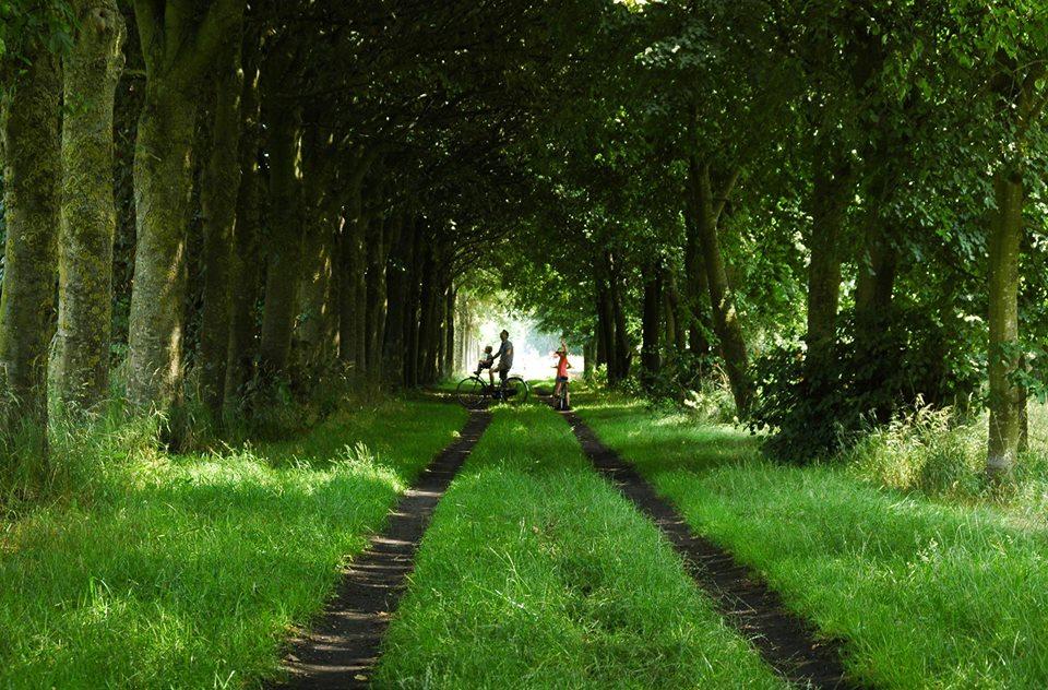 Tree tunnel, Brugge, Belgium