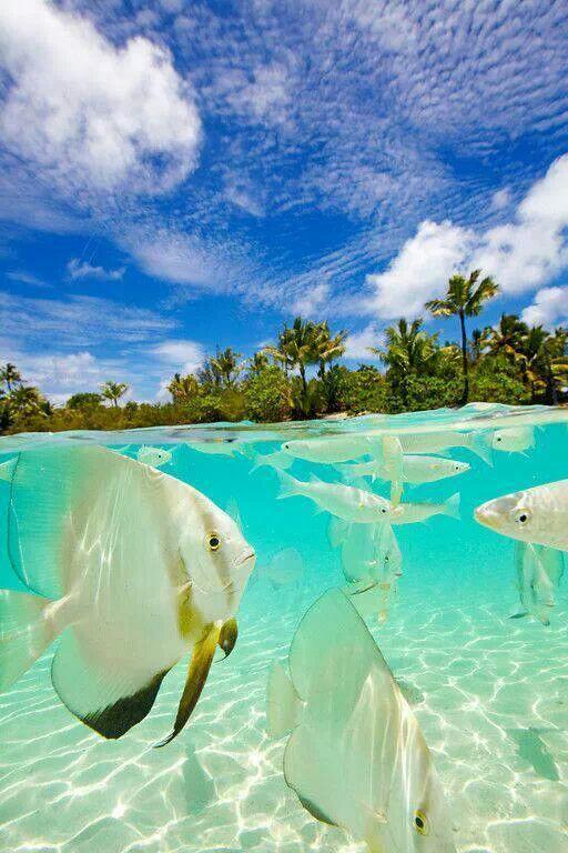 Split View, Bora Bora