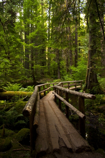 Forest Bridge, Oregon