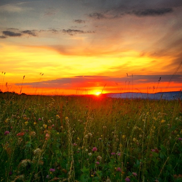 Wildflowers field sunset, Romania