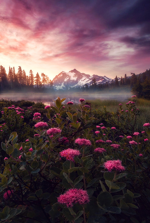 Purple Haze, Mount Shuksan, Washington