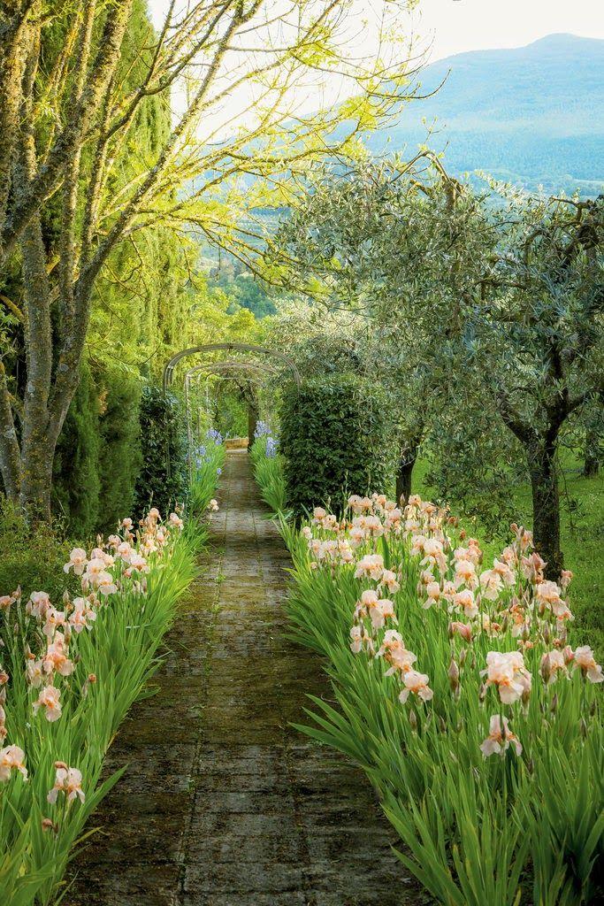 Garden path, Tuscany, Italy