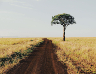Lonely tree, Kenya