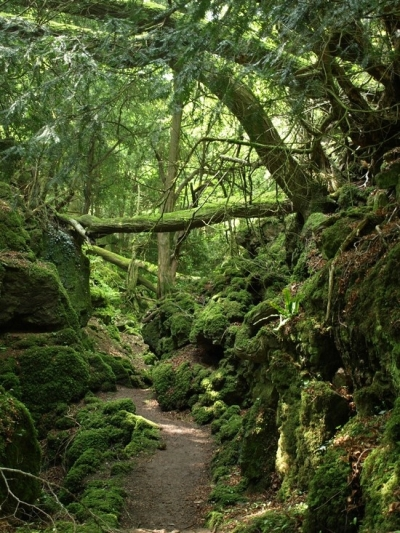 Pathway, Forest of Dean, Gloucestershire, England