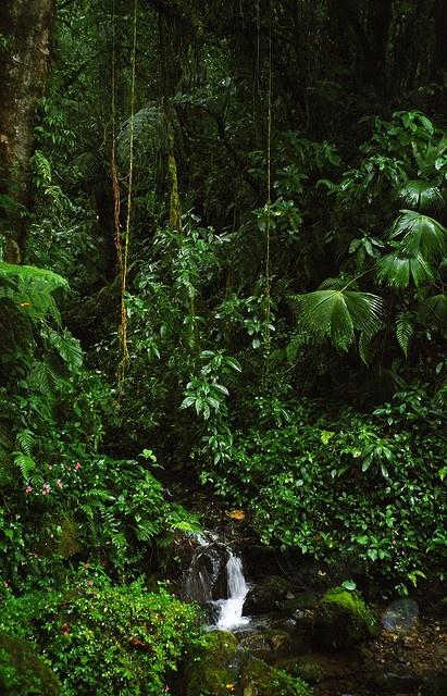 Rain forest, Panama