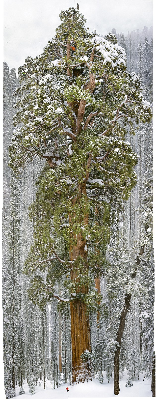The President Tree, Sequoia National Park, California