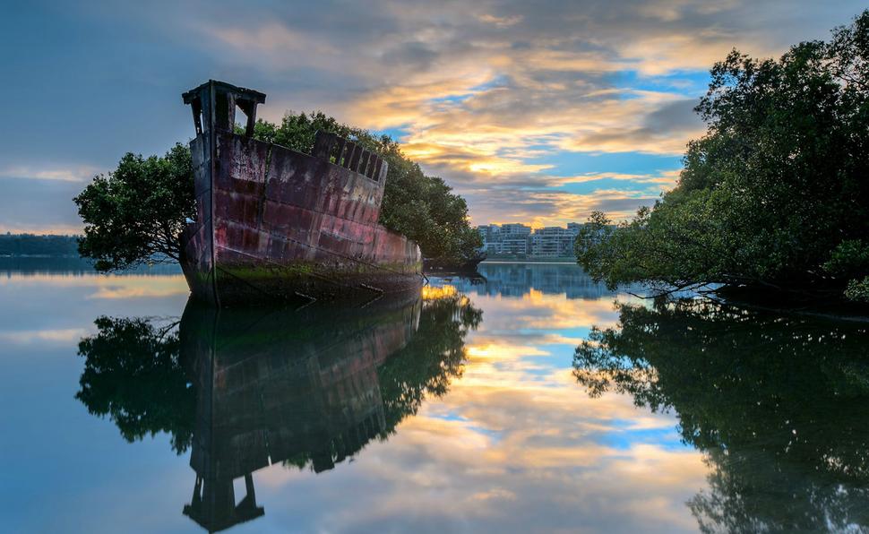 Floating forest, Sydney, Australia