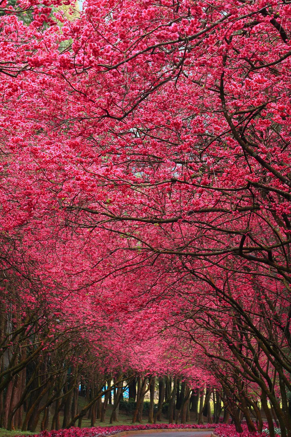Spring in Yuchi, Nantou, Taiwan