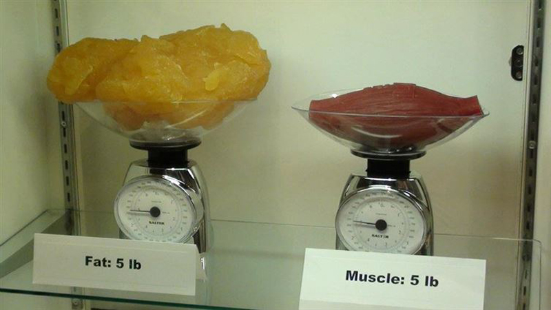 Five pounds of fat compared to five pounds of muscle
