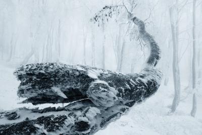 Winter in the Ore mountains, Czech Republic