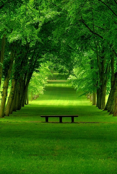 Lush Green Park Chamrande France Photo On Sunsurfer